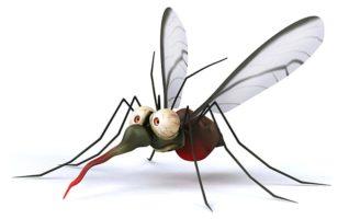 Lutter-contre-les-moustiques-Stop-aux-moustiques